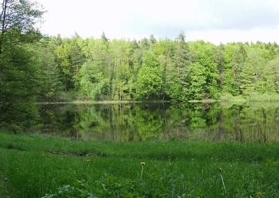 """Jezioro """"Leśne"""""""