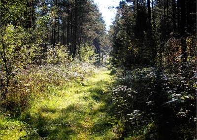 """Droga przez las do """"Teatru Węgajty"""""""